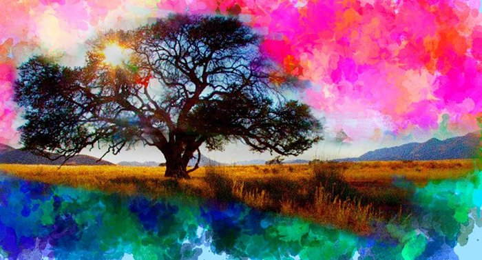 photoViva app draw on picture of a tree