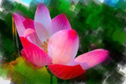 Draw on pictures gallery photoviva app draw on picture of a pink flower mightylinksfo